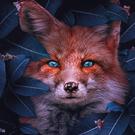 -Foxx